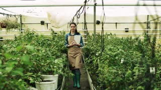 Young woman gardener working in a large greenhouse with pots of seedlings and plants, walking.