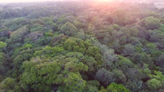 Aerial drone flight over the canopy in French Guiana forest. Amazonian sunset
