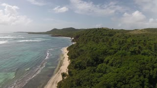 Aerial drone shot over beautiful tropical beach with close up around windy palm trees. Mangrove forest and martinique beach.