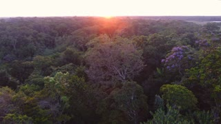 Aerial drone view over the canopy in French Guiana forest. Amazonian sunset
