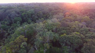 Close drone flight over the canopy in French Guiana forest. Amazonian sunset