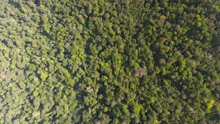 High altitude vertical drone shot Amazonian rain forest French Guiana
