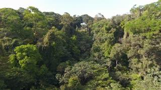 Rain forest amazonian French Guiana. Biodiversity aerial shot