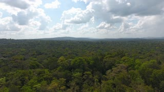 Slow drone aerial flight over amazonian rain forest Guiana. Day time