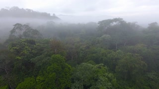 Slow drone flight over a primary tropical rainforest Saül Guiana Amazonian Park. Foggy day