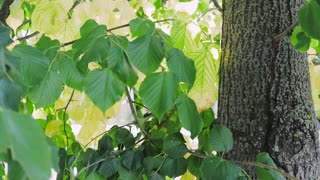 Close-up of a tree with green leaves and sunlight