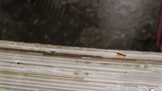 Discarded cigarette butt in the rain