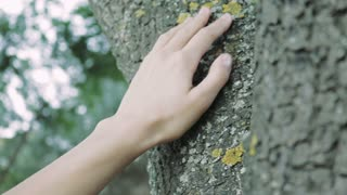 Female hand touches the trunk of a tree, slow motion