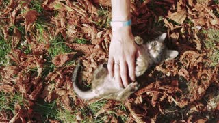 Female hands stroked a kitten in the park in autumn. Top view, slow motion.
