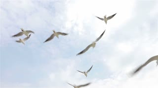 Flock of seagulls flying in the sky on a clear day, slow motion, view from below