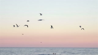 Flock of seagulls flying over the sea at sunset in slow motion