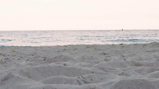 Silhouettes of two dogs running on the beach for one another, slow motion