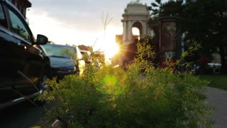Summer sunbeams shine through the city flower bed in the park in the evening