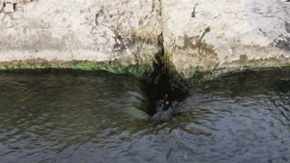 Water flows into the drain hole outdoors