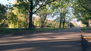Wide tracking shot of an asphalt footpath in a park; a young man is running on the footpath