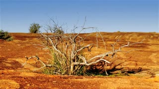 The dry and arid landscape of the Australian Outback.