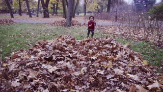 Boy running and jumping into leaves, steadycam shot, slow motion shot