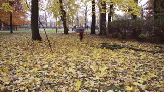 Boy running to the camera with leaves, steadycam shot, slow motion shot