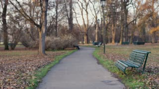 Handsome man walking in the park and texting messages on smartphone, steadycam s