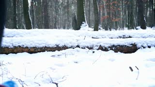 Jogger running in the forest at winter, steadycam shot, slow motion shot