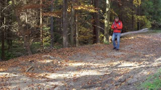 Man walking in autumnal forest and recording scenery on smartphone