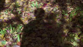 Shadow walking in forest, steadycam shot, slow motion shot at 240fps