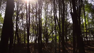 Sun coming forcing through trees, steadycam shot, slow motion shot at 240fps