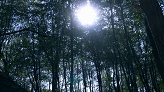Sun coming through trees, steadycam shot, slow motion shot at 240fps