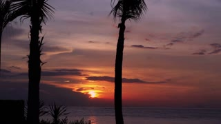 View of beautiful palm tress and sunset at the seaside