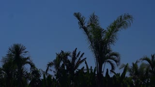 View of palm trees moving on the wind, slow motion shot