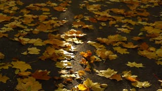 View of the autumnal trees and ground full of leaves, slow motion shot