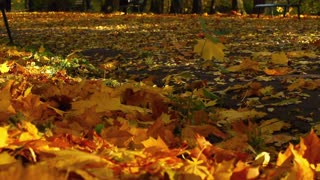 View of the beautiful park at autumn, slow motion shot