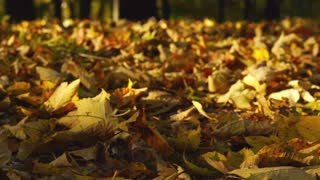 View of the ground cover in leaves, slow motion shot at 240fps