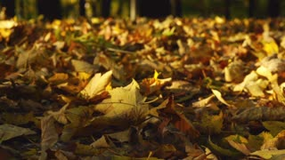 View of the ground cover in leaves, slow motion shot