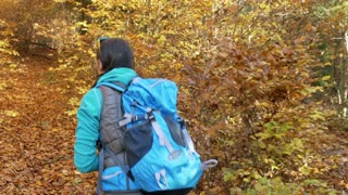 Woman walking with the backpack in the autumnal forest, steadycam shot