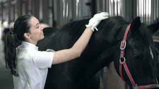 Close up of young horse handler smiling and combing a horse with affection