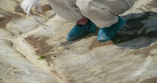 Ecologist taking ground samples in infected zone