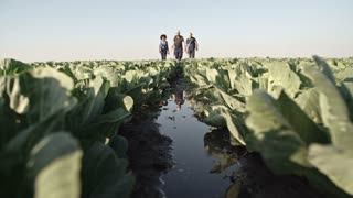Ground angle shot of young farmers in rubber boots stepping through mud on cabbage field