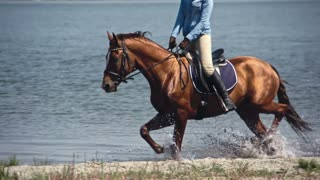 Tracking of brown Russian Don horse with equestrienne trotting from water to lake shore in slow motion