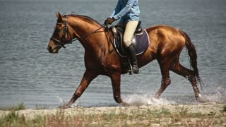 Tracking of mounted brown horse with shining hair trotting on lake in slow motion