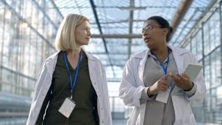 Dolly of cheerful woman agronomist in lab coat and her female African colleague with tablet chatting and walking through industrial greenhouse complex