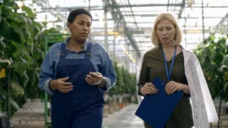Dolly of female African worker in overalls discussing something with woman in lab coat carrying clipboard while walking through commercial greenhouse