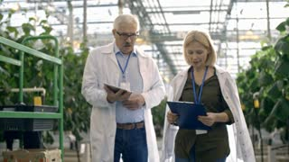 Dolly of senior male scientist in lab coat and glasses holding tablet and discussing work with female colleague with clipboard while walking through commercial greenhouse