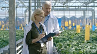 Dolly with slowmo of mature female agronomist in glasses and her senior male colleague inspecting plants and making notes while walking through commercial greenhouse