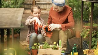 Handheld medium shot of cute little girl in gloves smiling and helping cheerful grandmother working with seedlings in greenhouse