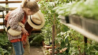 Handheld side view shot of cheerful grandmother in straw hat talking to little girl and showing her plants growing in pots in greenhouse