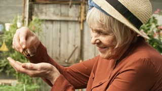 Handheld side view shot of happy senior female gardener in straw hat breaking apart dry flower seed heads with her fingers and inspecting them with joy