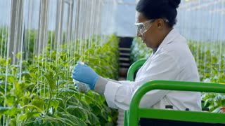 Medium shot of cheerful female African agronomist in lab coat and safety goggles standing on trolley and putting pesticides on cucumber plants in industrial greenhouse