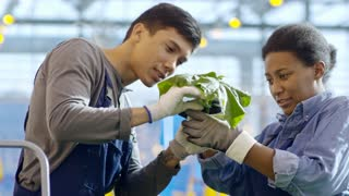 Medium shot of young male greenhouse worker and his female African colleague inspecting green cucumber plant
