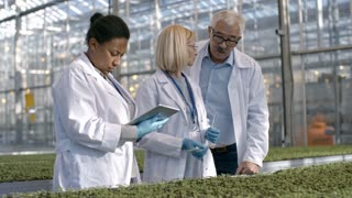 PAN of African woman in lab coat standing before grow bed with seedlings and looking at tablet as mature colleague and male senior agriculture scientist discussing sample in test tube